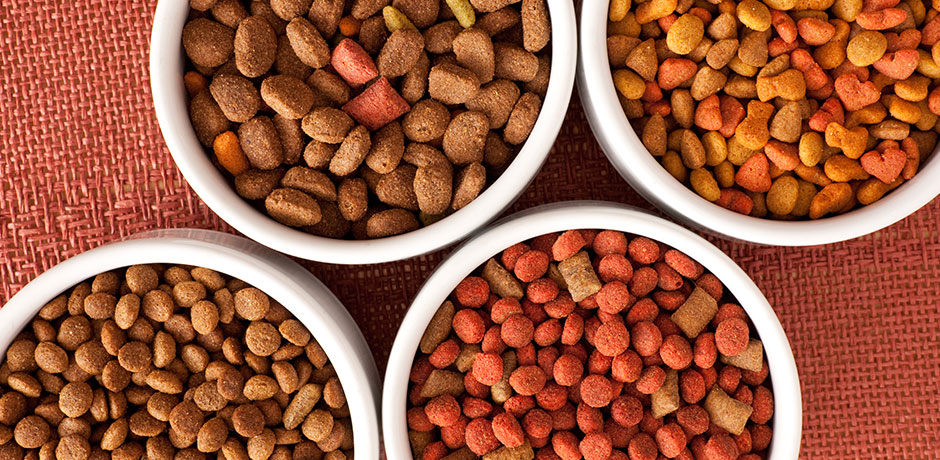best pet food